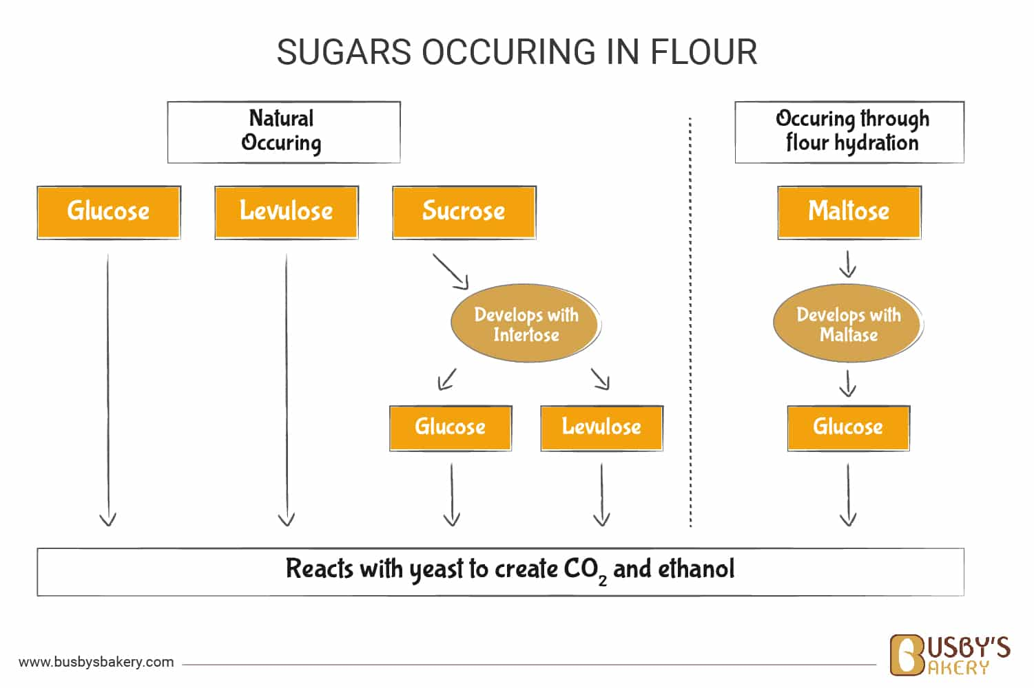 How sugars occur from the flour diagram
