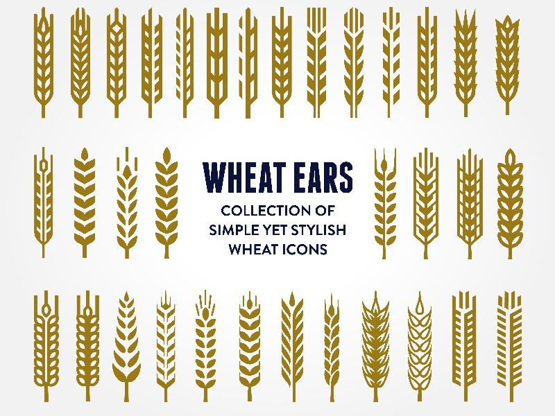 Types of wheat ears